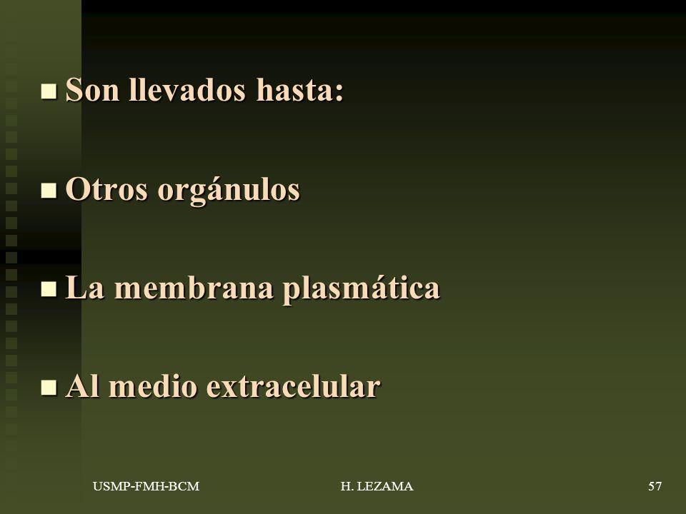La membrana plasmática Al medio extracelular