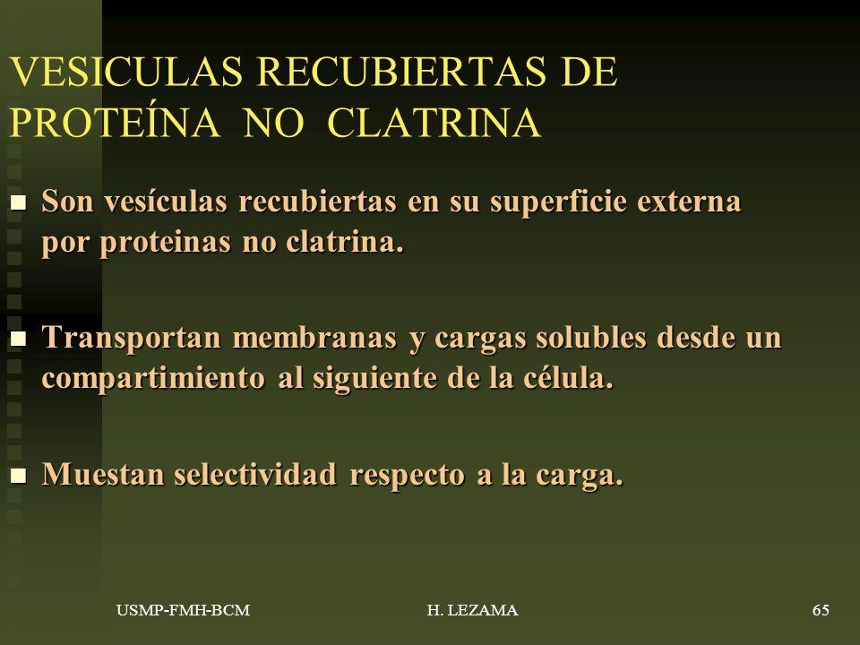 VESICULAS RECUBIERTAS DE PROTEÍNA NO CLATRINA