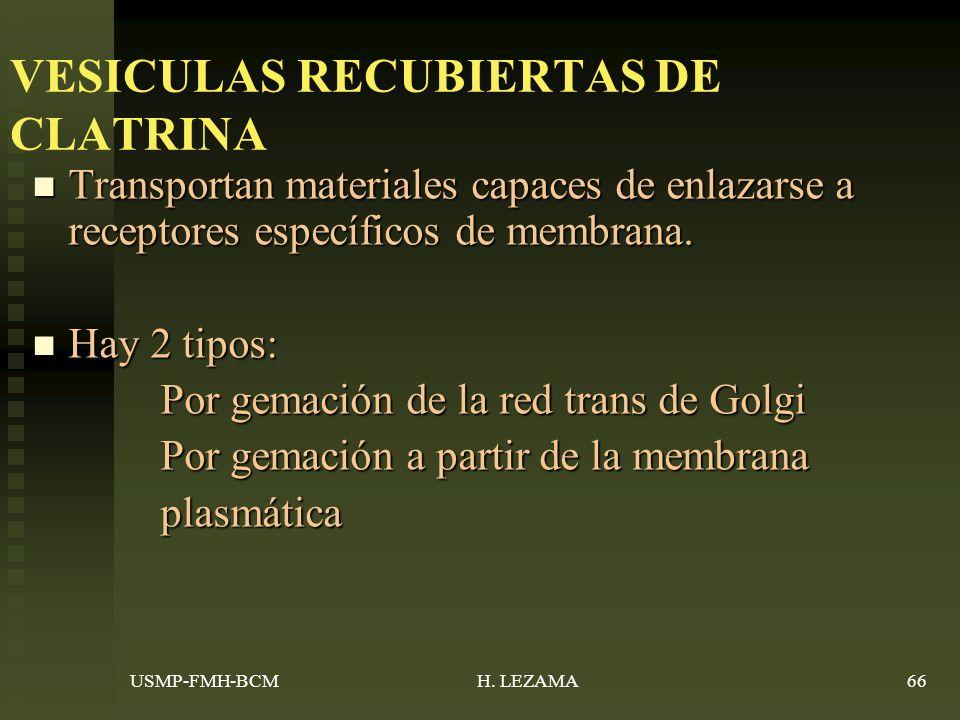 VESICULAS RECUBIERTAS DE CLATRINA