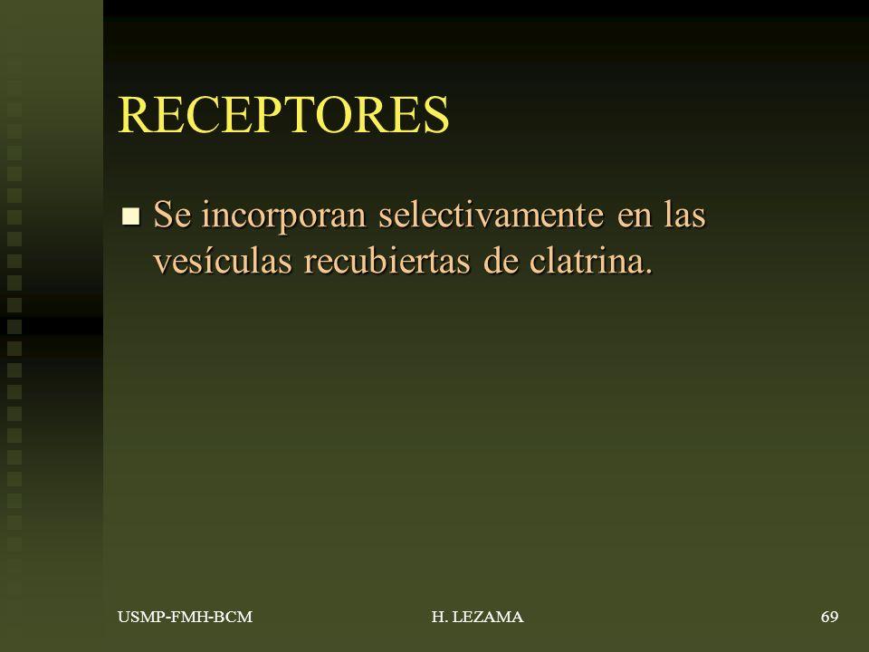 RECEPTORES Se incorporan selectivamente en las vesículas recubiertas de clatrina.
