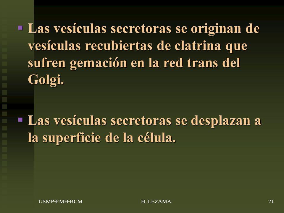 Las vesículas secretoras se desplazan a la superficie de la célula.