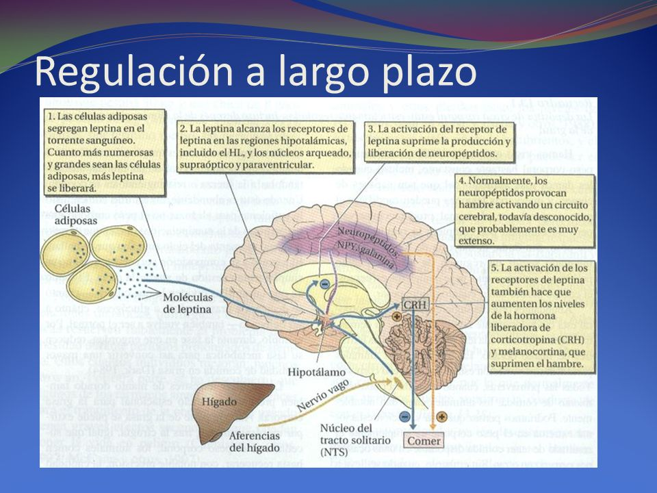 Regulación a largo plazo