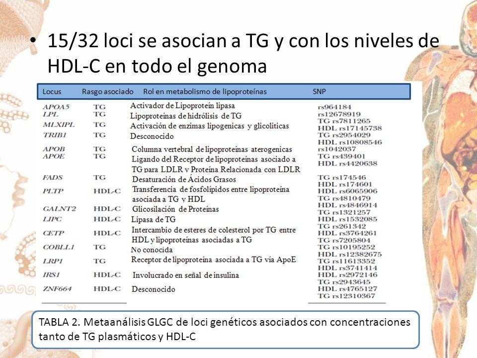 15/32 loci se asocian a TG y con los niveles de HDL-C en todo el genoma