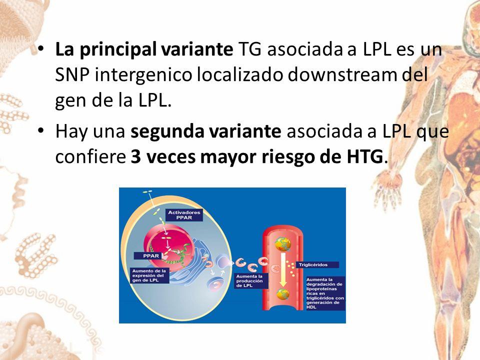 La principal variante TG asociada a LPL es un SNP intergenico localizado downstream del gen de la LPL.