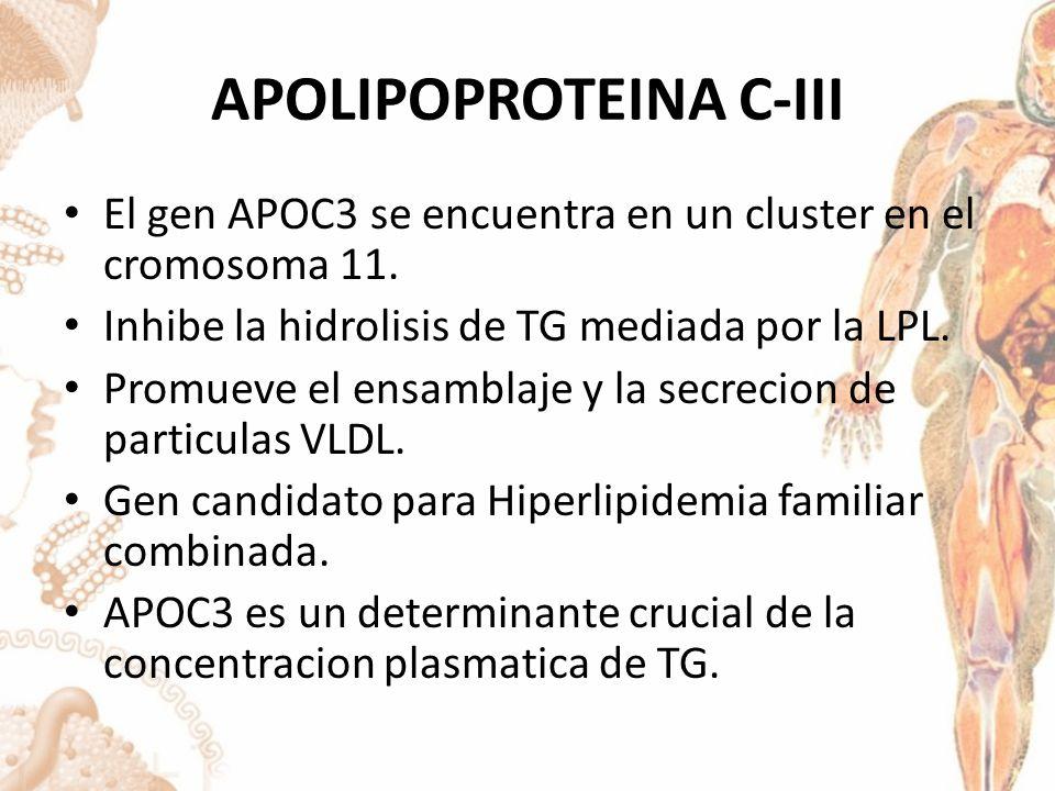 APOLIPOPROTEINA C-III