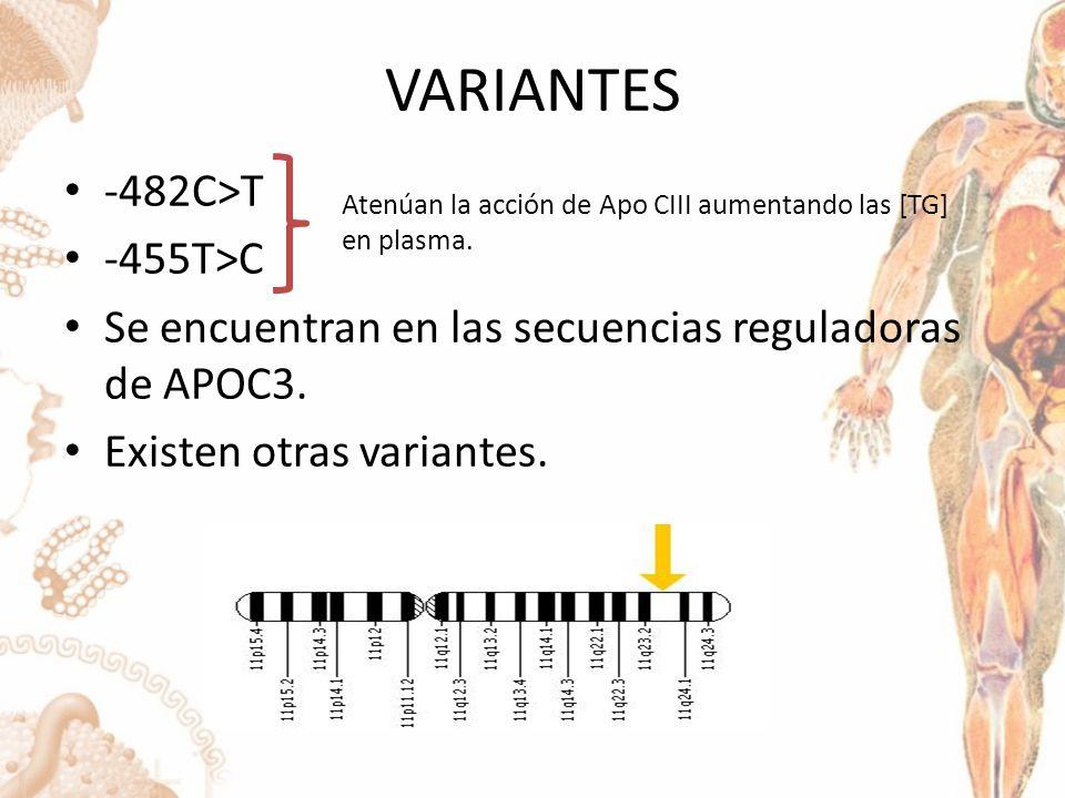 VARIANTES -482C>T -455T>C