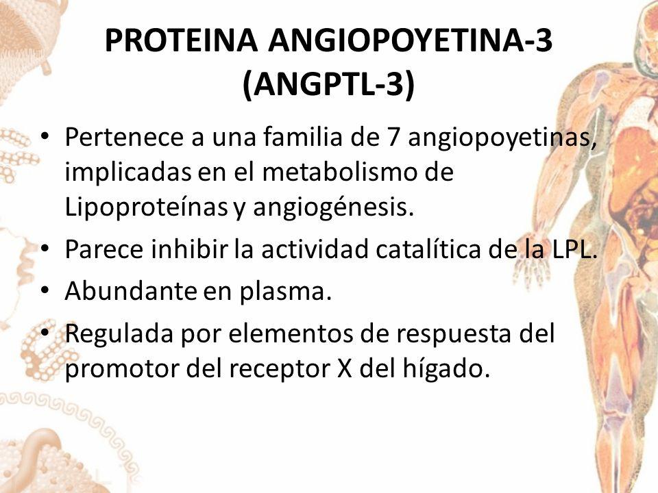 PROTEINA ANGIOPOYETINA-3 (ANGPTL-3)