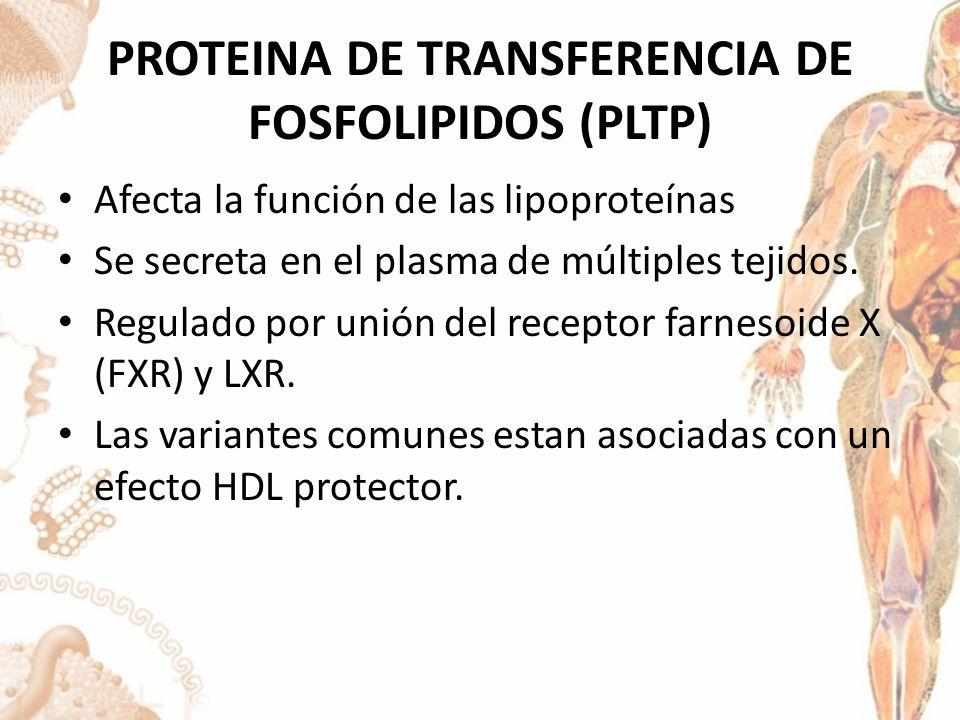PROTEINA DE TRANSFERENCIA DE FOSFOLIPIDOS (PLTP)