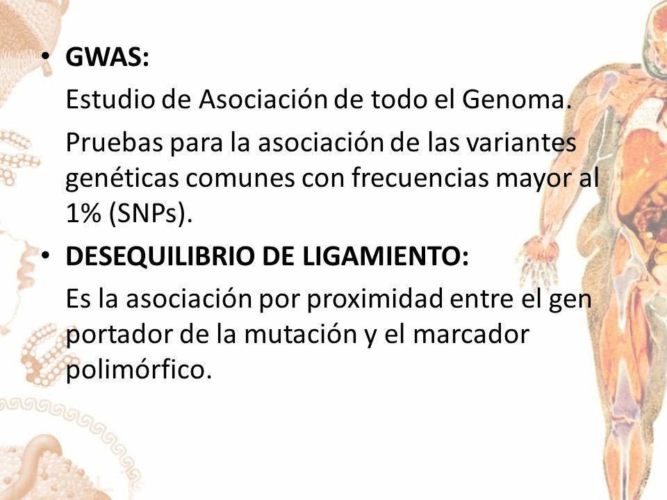 GWAS: Estudio de Asociación de todo el Genoma. Pruebas para la asociación de las variantes genéticas comunes con frecuencias mayor al 1% (SNPs).