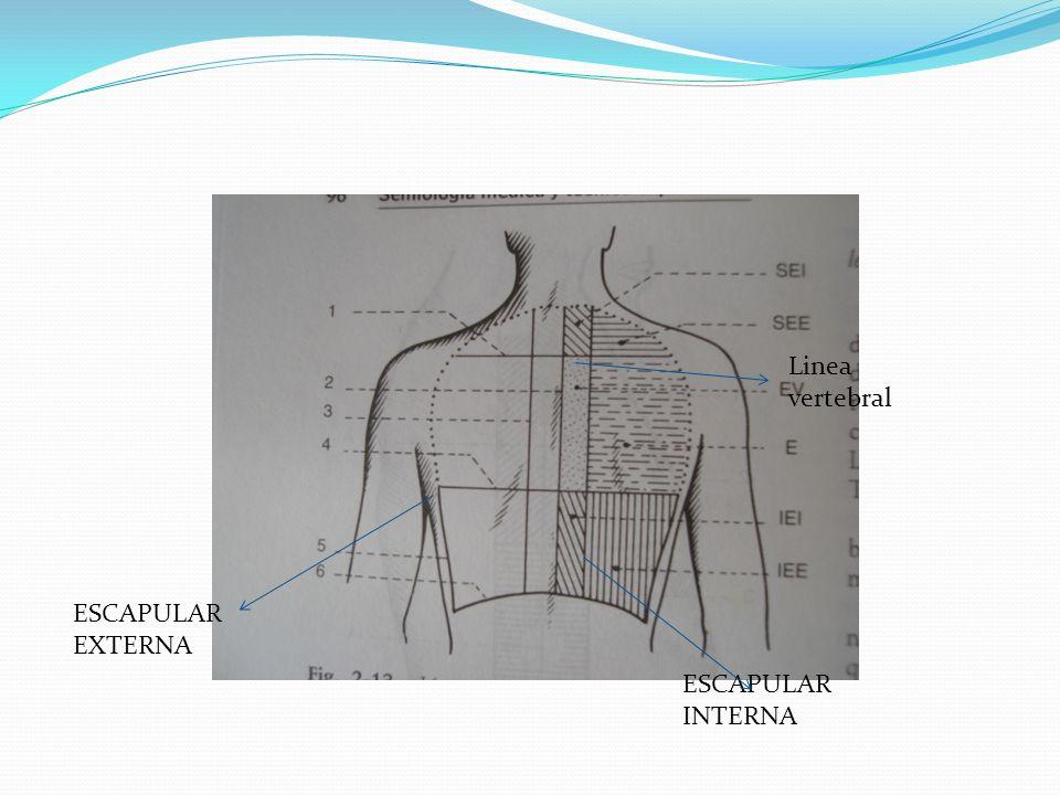 Linea vertebral ESCAPULAR EXTERNA ESCAPULAR INTERNA