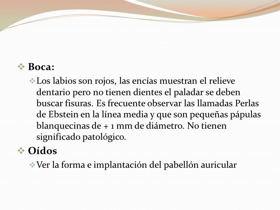 Boca: