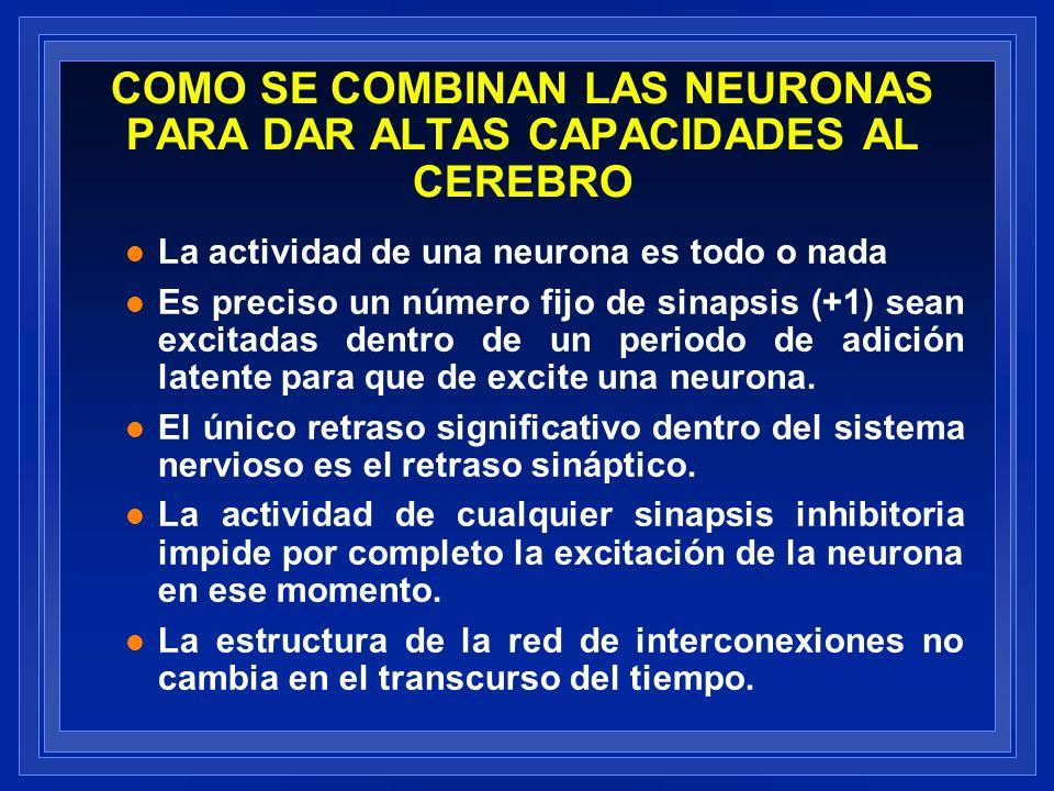 COMO SE COMBINAN LAS NEURONAS PARA DAR ALTAS CAPACIDADES AL CEREBRO