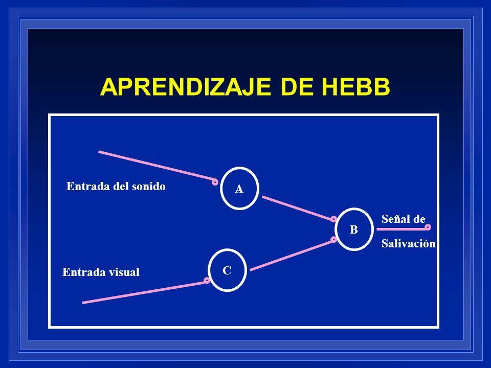 APRENDIZAJE DE HEBB A Entrada del sonido Señal de B Salivación C