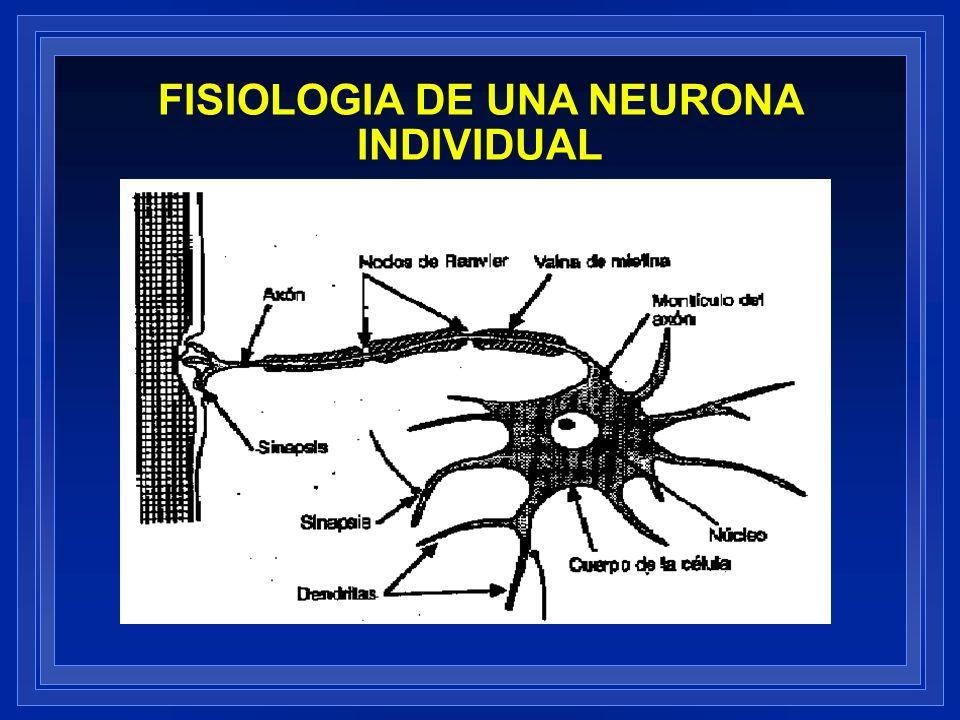 FISIOLOGIA DE UNA NEURONA INDIVIDUAL