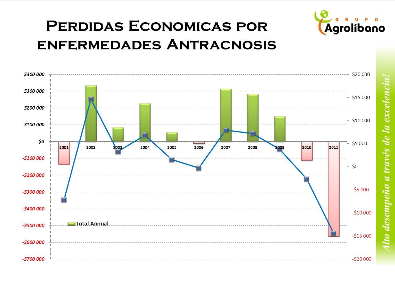 Perdidas Economicas por enfermedades Antracnosis