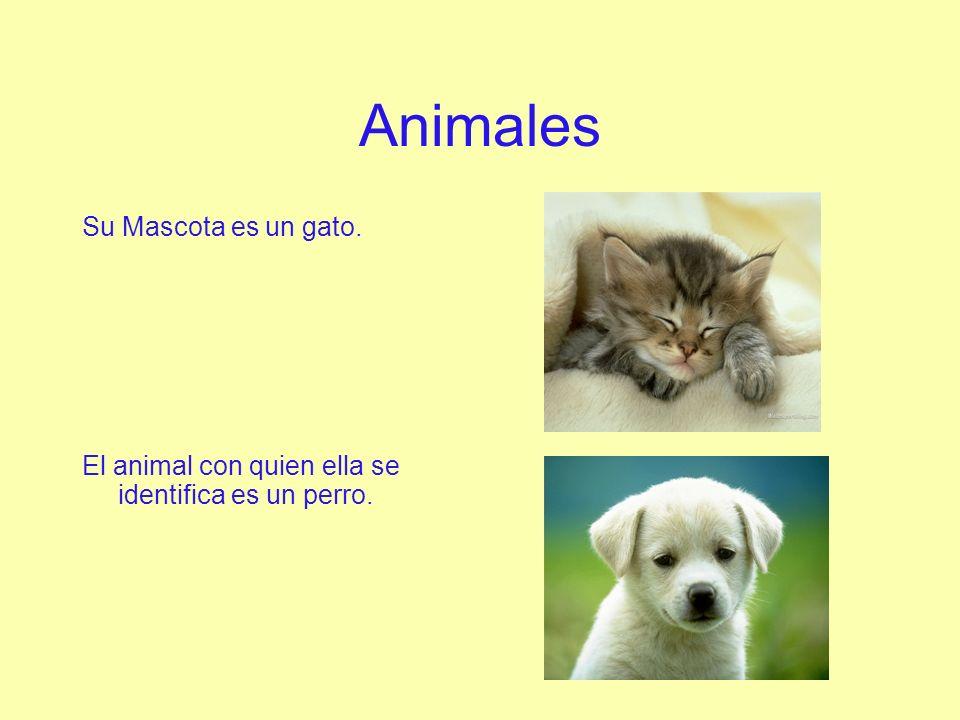 Animales Su Mascota es un gato.