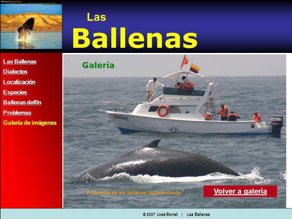 Ballenas Galería Las Volver a galería Las Ballenas Dialectos