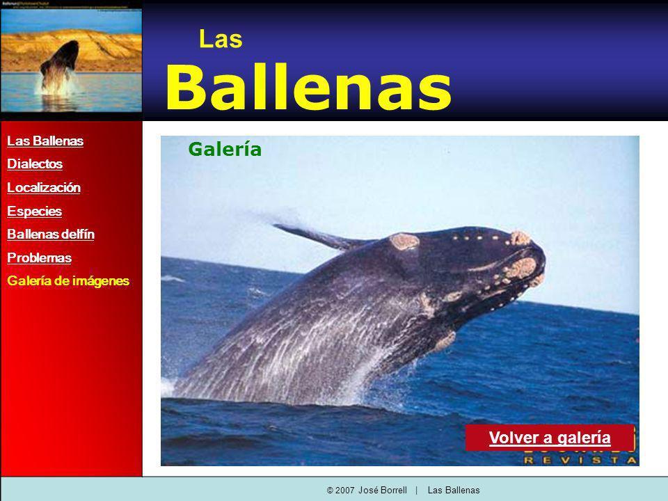 © 2007 José Borrell | Las Ballenas