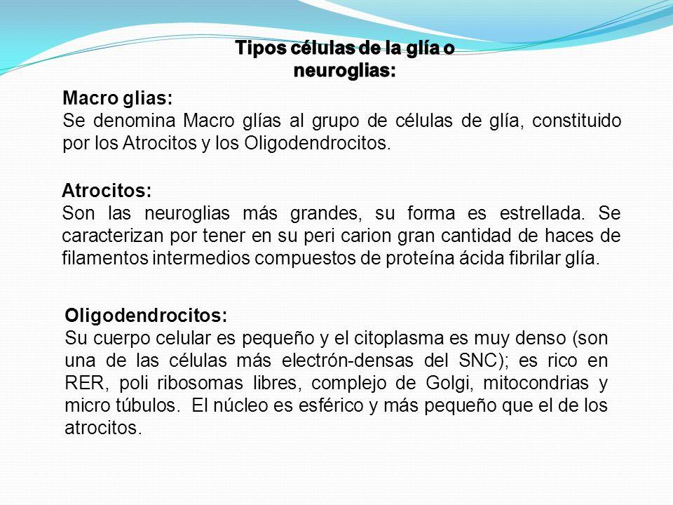 Tipos células de la glía o neuroglias: