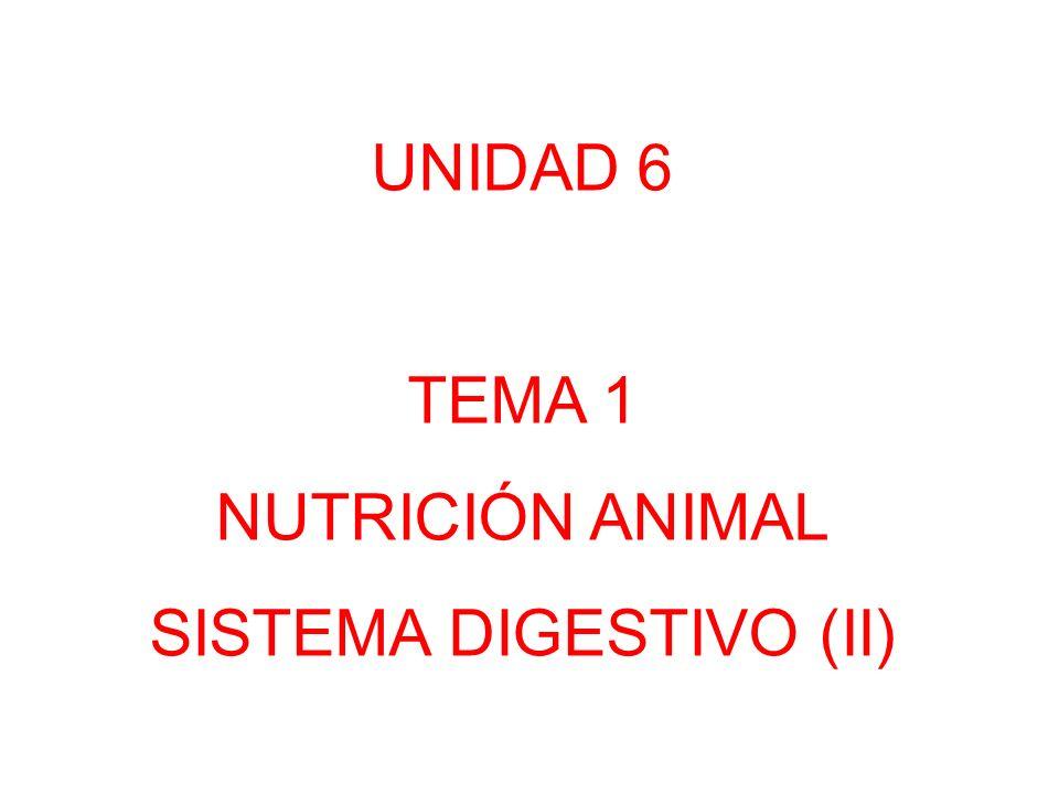SISTEMA DIGESTIVO (II)