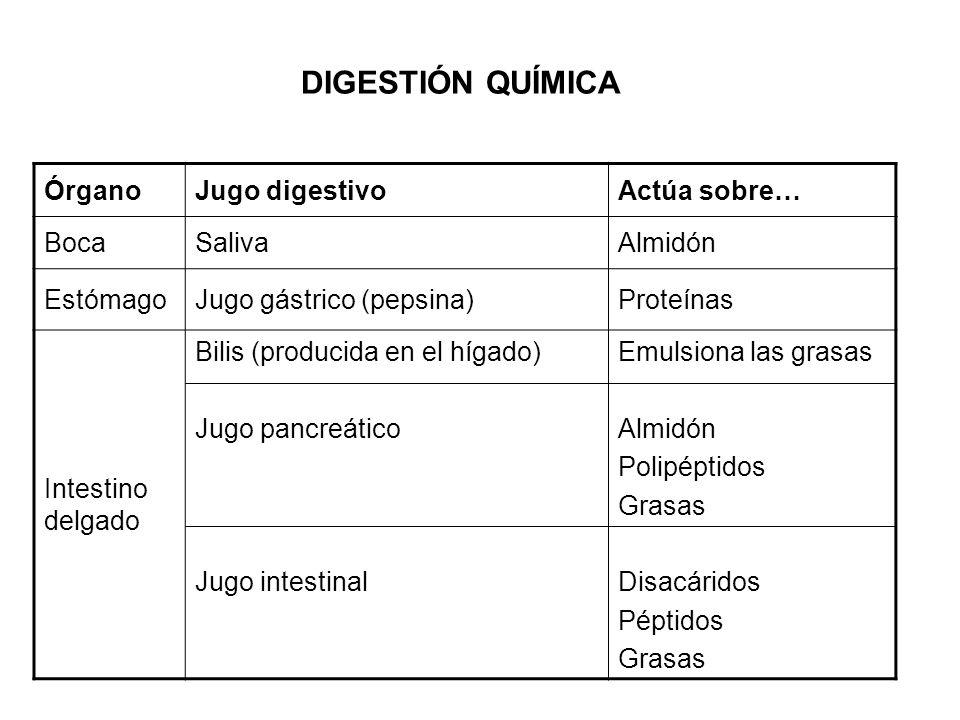 DIGESTIÓN QUÍMICA Órgano Jugo digestivo Actúa sobre… Boca Saliva
