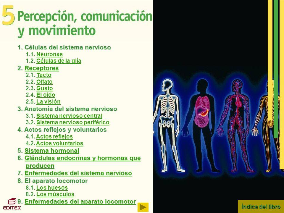 1. Células del sistema nervioso
