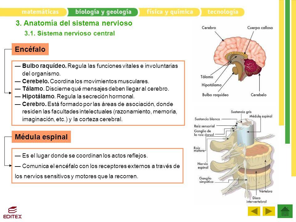 3.1. Sistema nervioso central
