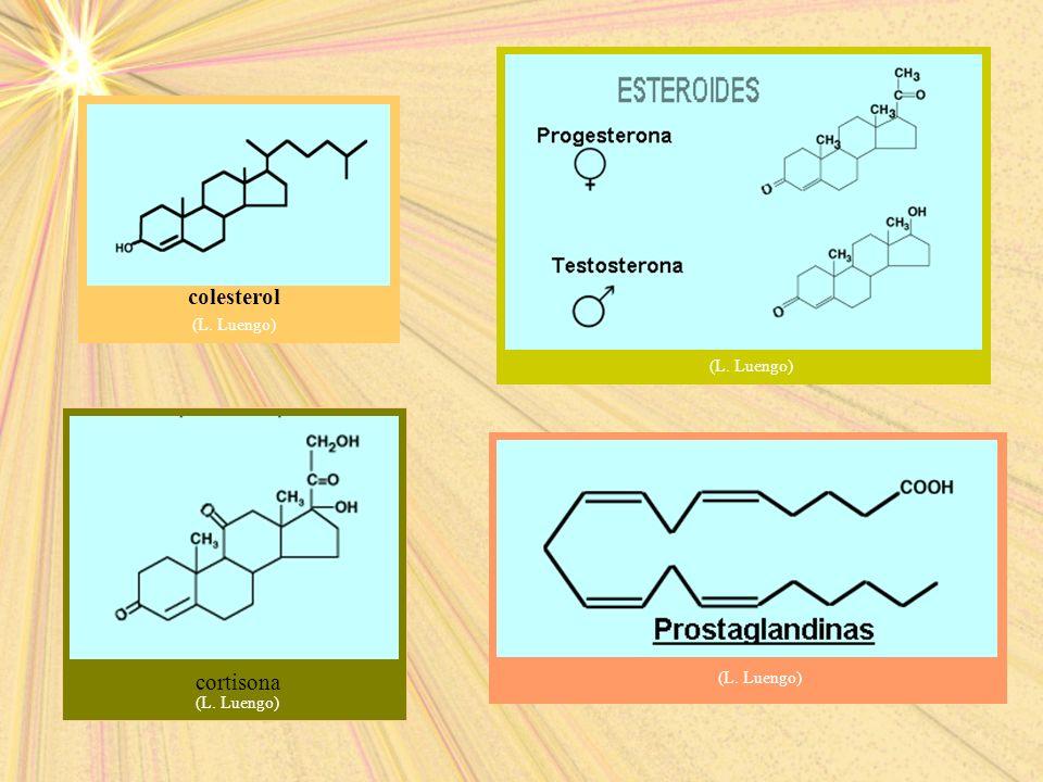 (L. Luengo) colesterol (L. Luengo) (L. Luengo) cortisona (L. Luengo)