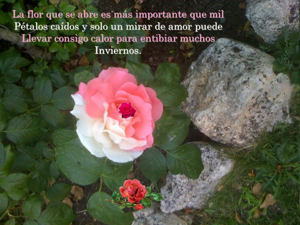 La flor que se abre es más importante que mil