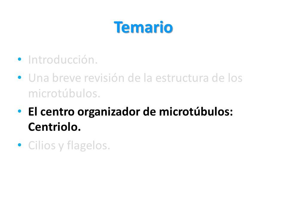 Temario Introducción. Una breve revisión de la estructura de los microtúbulos. El centro organizador de microtúbulos: Centriolo.