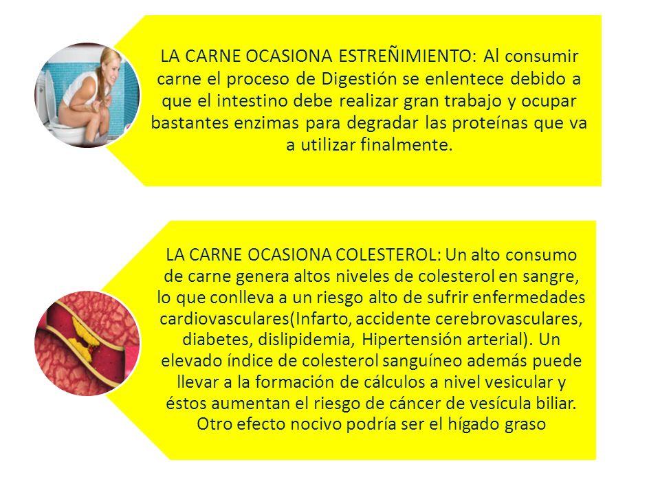 LA CARNE OCASIONA ESTREÑIMIENTO: Al consumir carne el proceso de Digestión se enlentece debido a que el intestino debe realizar gran trabajo y ocupar bastantes enzimas para degradar las proteínas que va a utilizar finalmente.