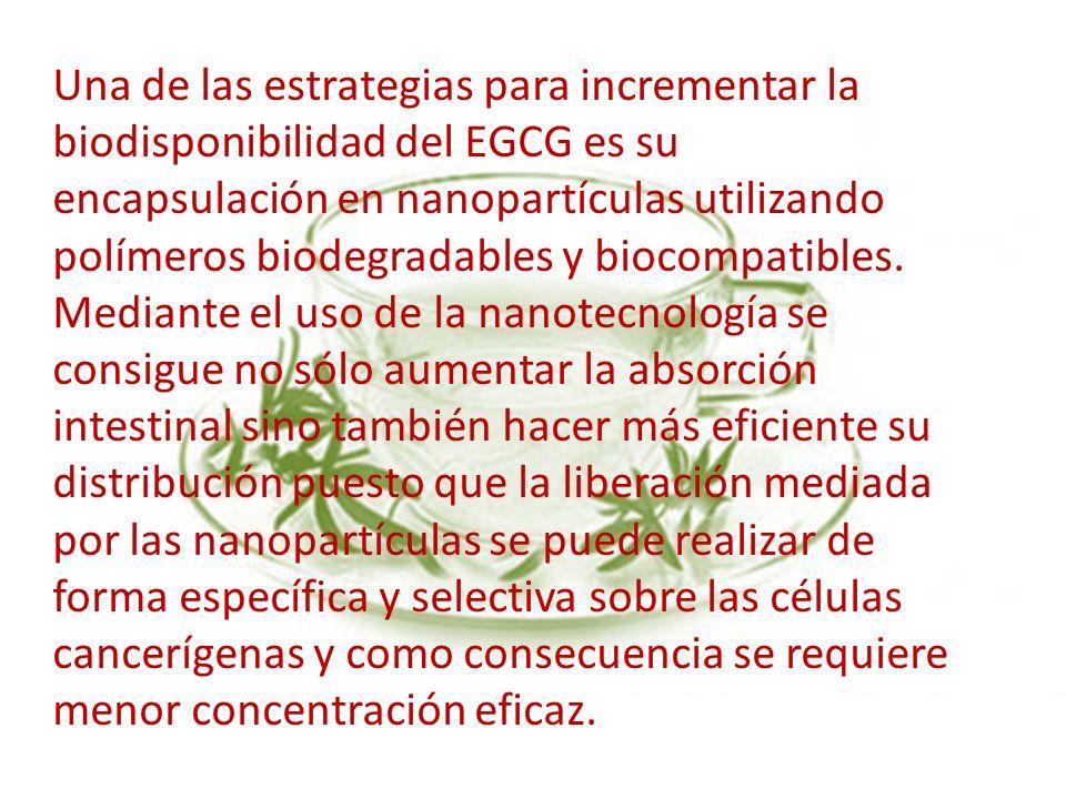 Una de las estrategias para incrementar la biodisponibilidad del EGCG es su encapsulación en nanopartículas utilizando polímeros biodegradables y biocompatibles.