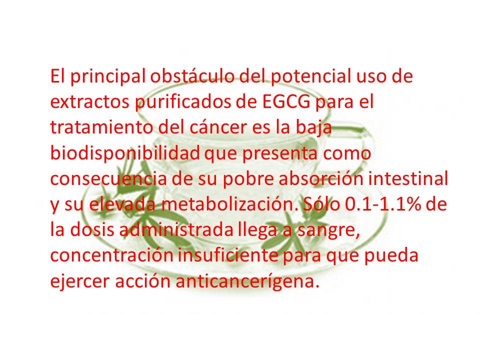 El principal obstáculo del potencial uso de extractos purificados de EGCG para el tratamiento del cáncer es la baja biodisponibilidad que presenta como consecuencia de su pobre absorción intestinal y su elevada metabolización.