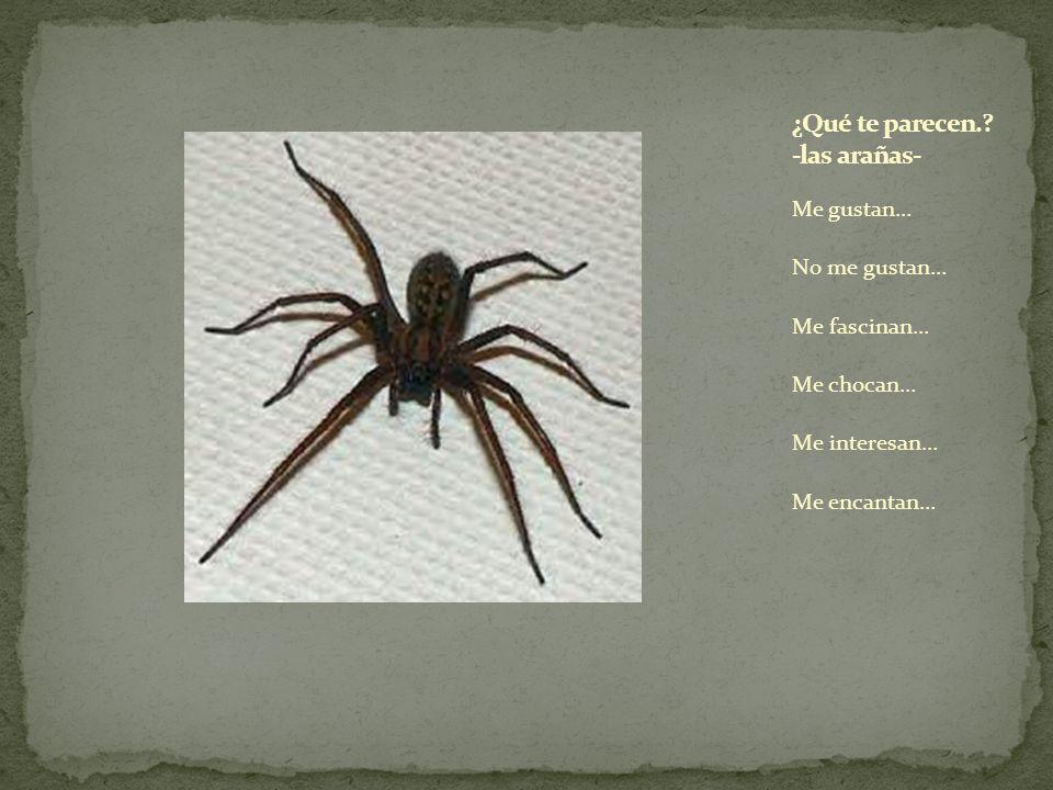¿Qué te parecen. -las arañas-