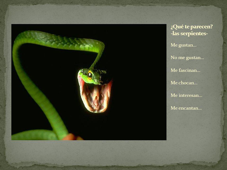 ¿Qué te parecen -las serpientes-