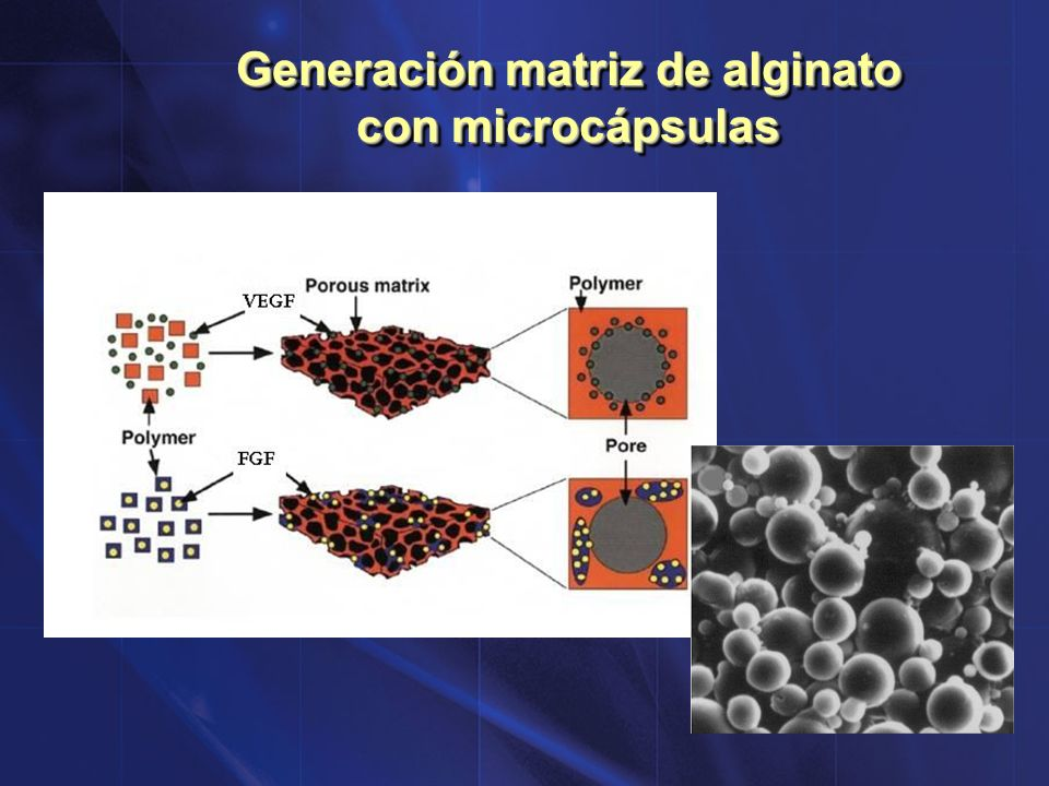 Generación matriz de alginato con microcápsulas