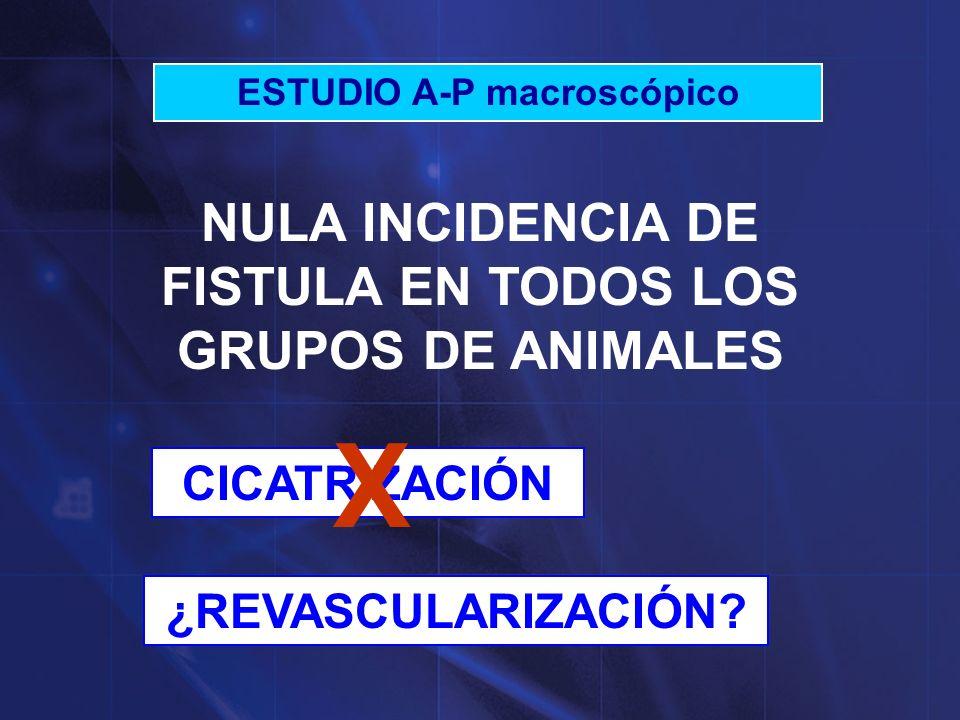 X NULA INCIDENCIA DE FISTULA EN TODOS LOS GRUPOS DE ANIMALES
