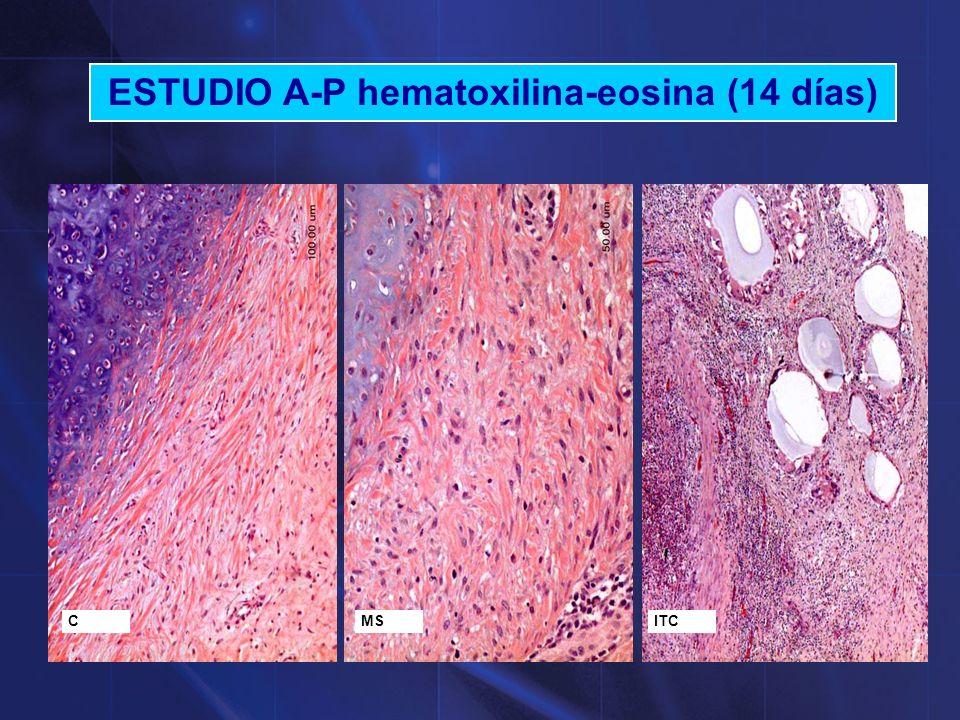 ESTUDIO A-P hematoxilina-eosina (14 días)