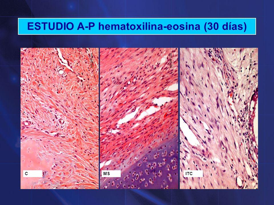 ESTUDIO A-P hematoxilina-eosina (30 días)