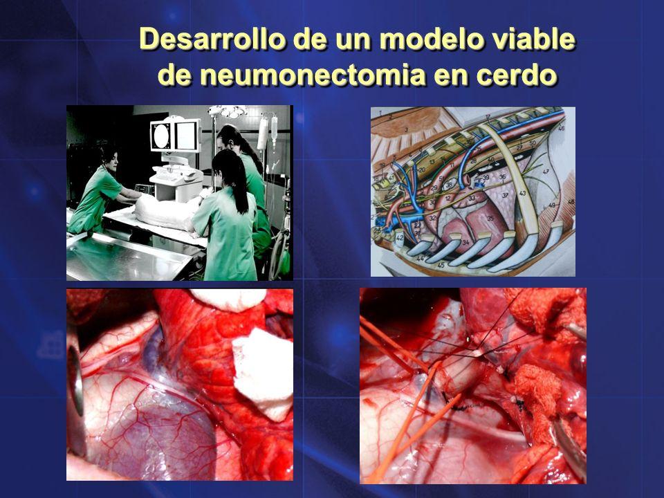 Desarrollo de un modelo viable de neumonectomia en cerdo