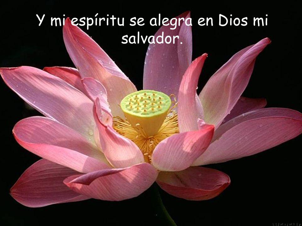 Y mi espíritu se alegra en Dios mi salvador.