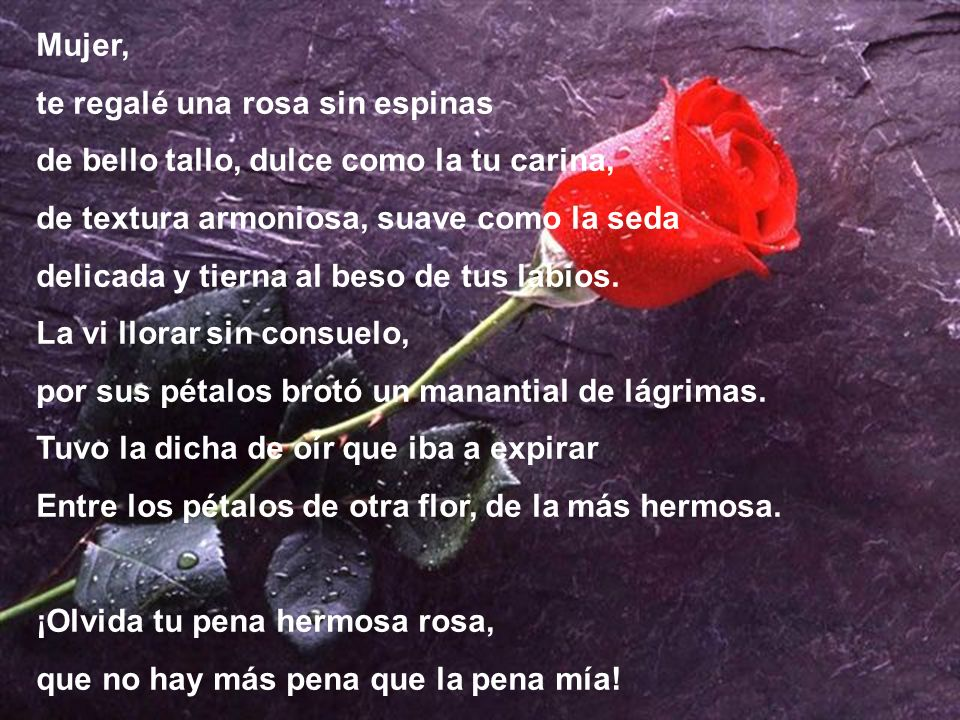 Mujer, te regalé una rosa sin espinas. de bello tallo, dulce como la tu carina, de textura armoniosa, suave como la seda.