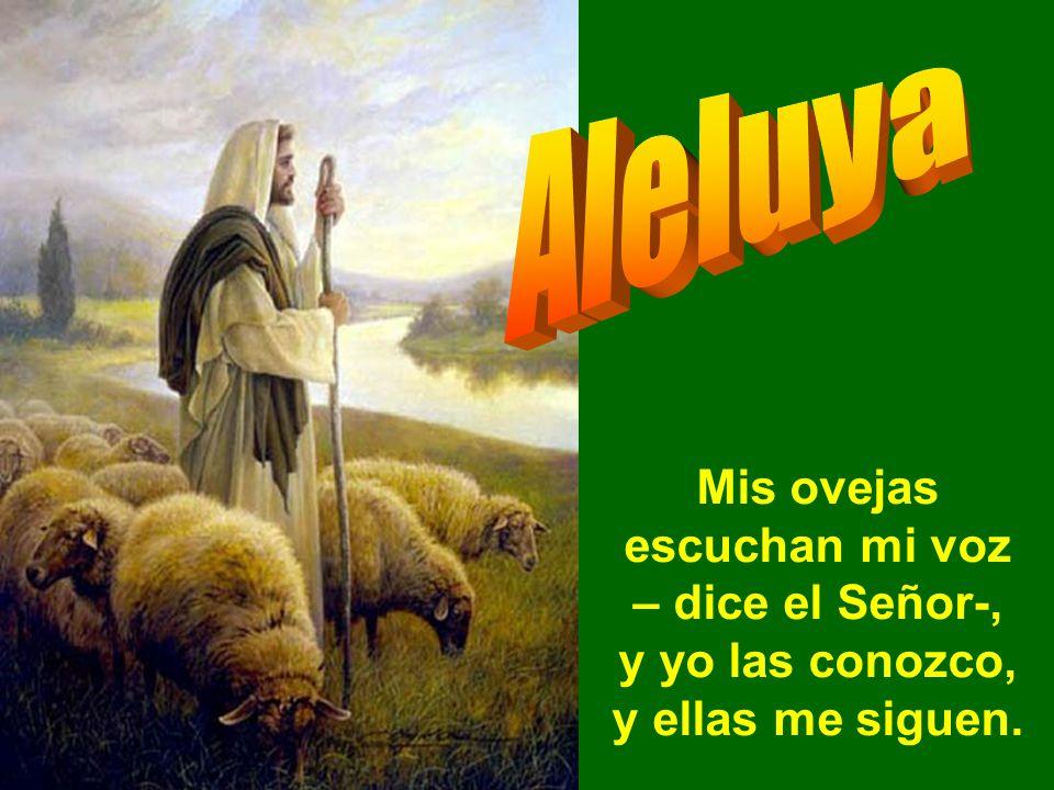 Aleluya Mis ovejas escuchan mi voz – dice el Señor-, y yo las conozco, y ellas me siguen.