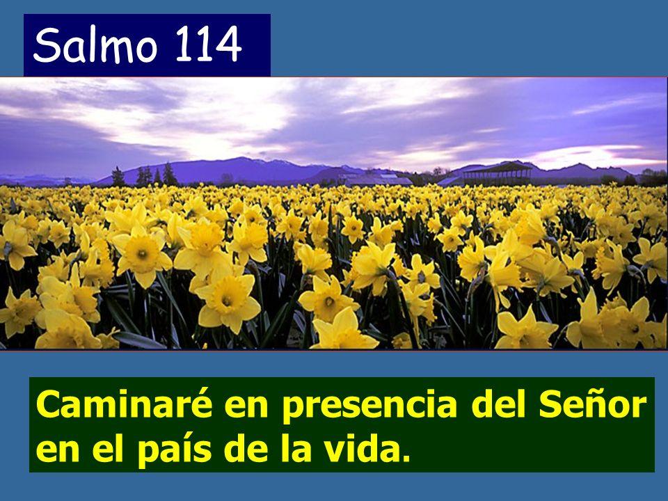 Salmo 114 Caminaré en presencia del Señor en el país de la vida.