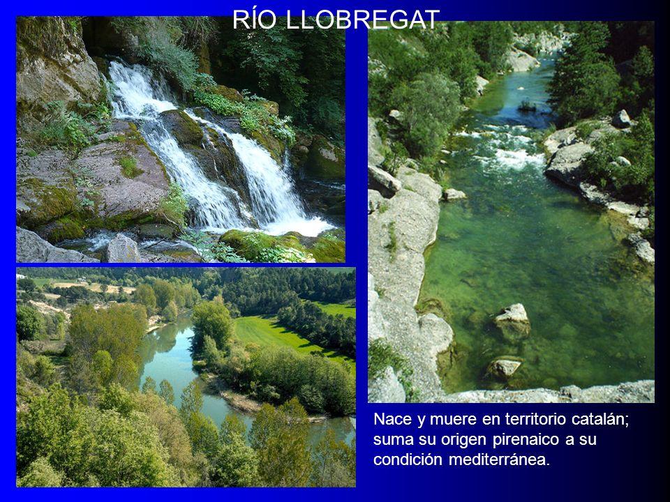 RÍO LLOBREGAT Nace y muere en territorio catalán; suma su origen pirenaico a su condición mediterránea.