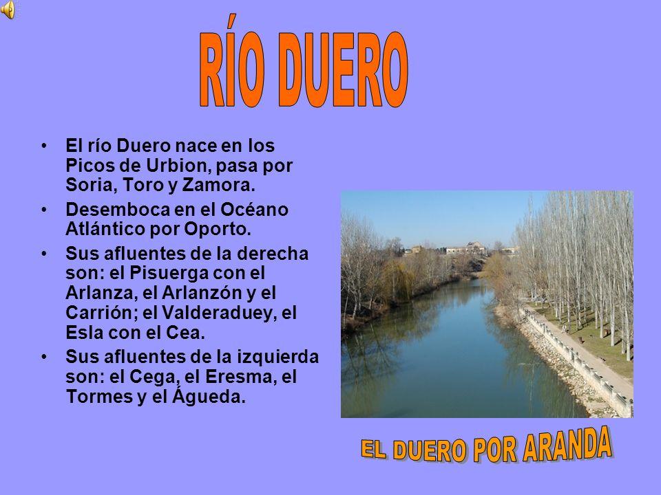 RÍO DUERO El río Duero nace en los Picos de Urbion, pasa por Soria, Toro y Zamora. Desemboca en el Océano Atlántico por Oporto.