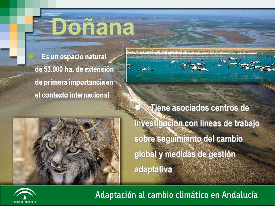 DoñanaEs un espacio natural. de 53.000 ha. de extensión. de primera importancia en. el contexto internacional.