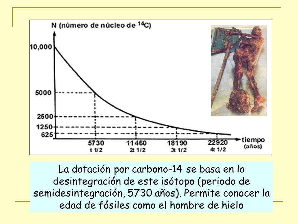 La datación por carbono-14 se basa en la desintegración de este isótopo (periodo de semidesintegración, 5730 años).