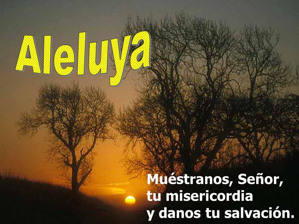 Aleluya Muéstranos, Señor, tu misericordia y danos tu salvación.