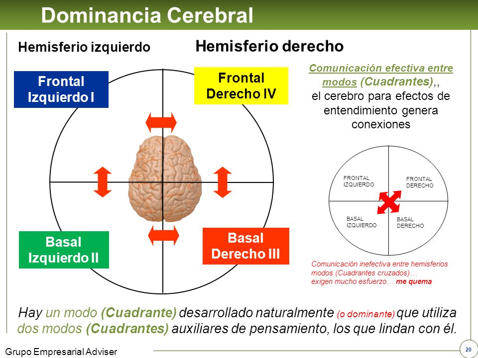 Dominancia Cerebral Hemisferio derecho Hemisferio izquierdo